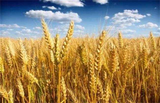 水稻根部 缺氧原因 防治方法