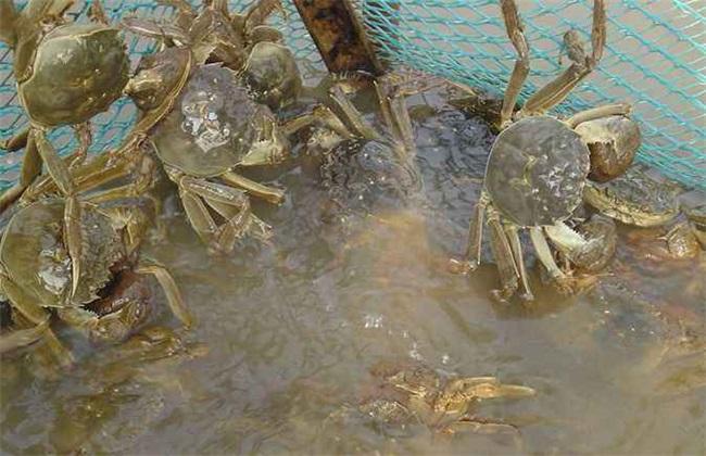 河蟹缺氧该怎么办