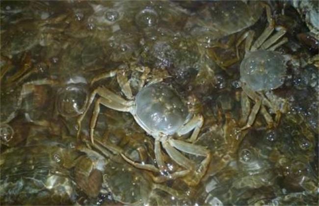河蟹 怎么办 缺氧