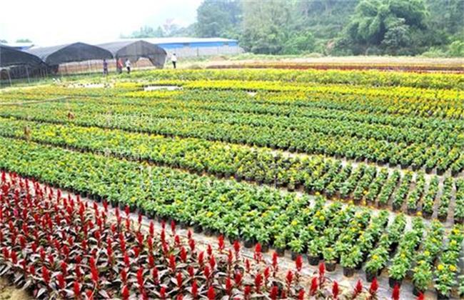 花卉苗木出售