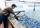 鳗鱼常见疾病及防治