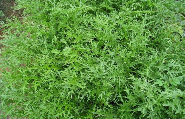 蔬菜 冬季 种植