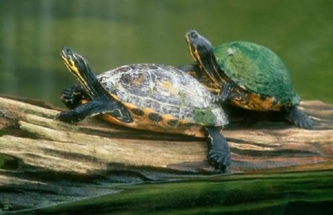 乌龟怎么养好