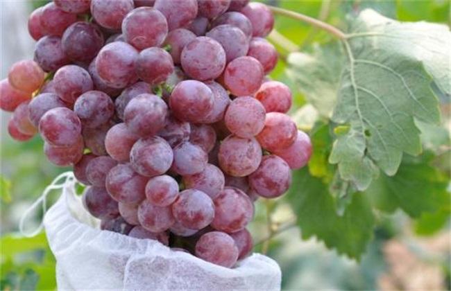 果粒小 葡萄 原因