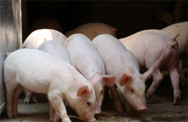 秋季养猪会出现什么问题