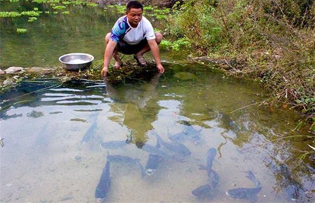养鱼时如何提高越冬的成活率