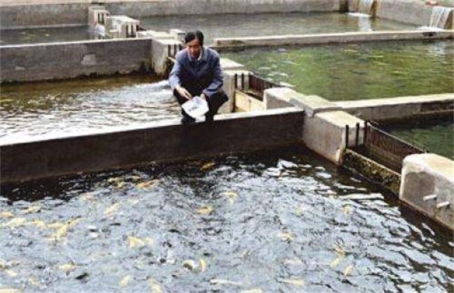提高成活率 养鱼 越冬