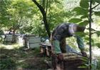 蜜蜂冬季管理要点