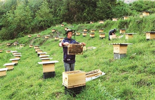 怎么样才能养好蜜蜂