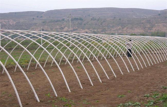反季节大棚蔬菜种植技术