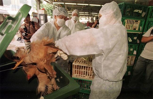防治措施 鸡禽流感 症状