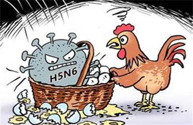 什么是H5N6禽流感
