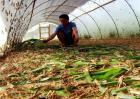 蚂蚱养殖技术