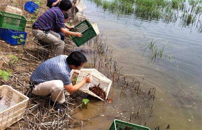 小龙虾 养殖 关键词