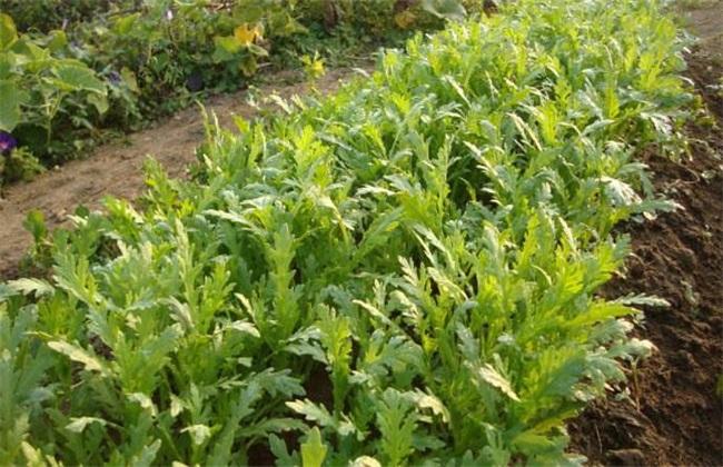 蔬菜 前景好 种植