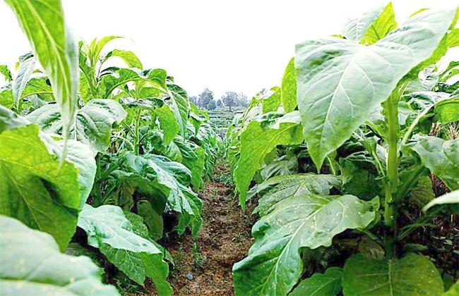 适合农村种植的6个致富项目推荐