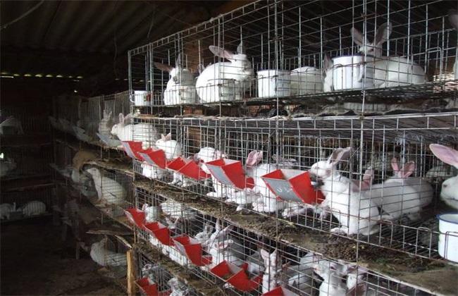 兔子 四季管理 养殖