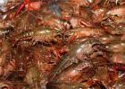 小龙虾多少钱一斤2018