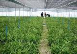 兰草的养殖方法