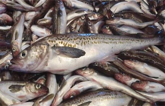 巴沙鱼 多少钱一斤 2018