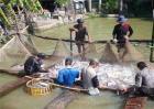 2018巴沙鱼多少钱一斤