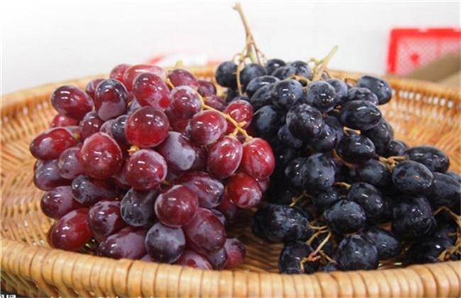 提子和葡萄的区别