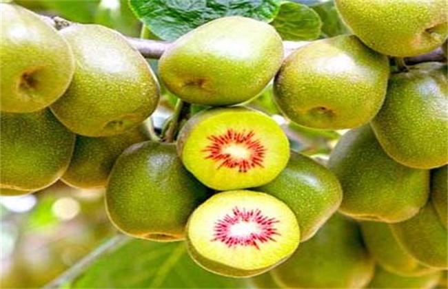 红心猕猴桃价格多少钱一斤
