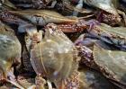 养殖价值较高的几种螃蟹