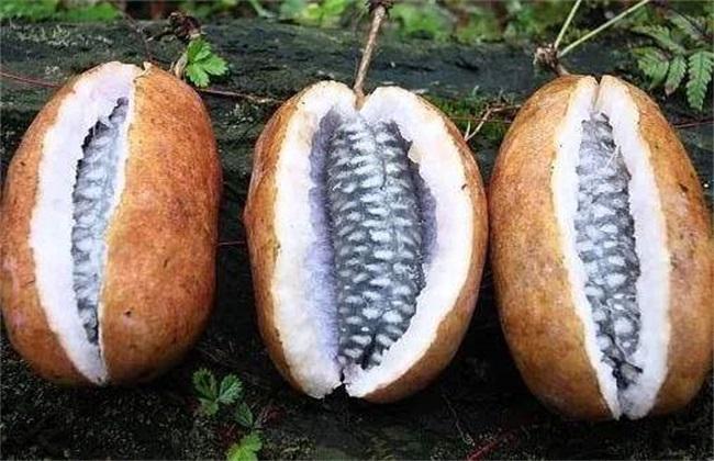多少钱 一斤 八月瓜