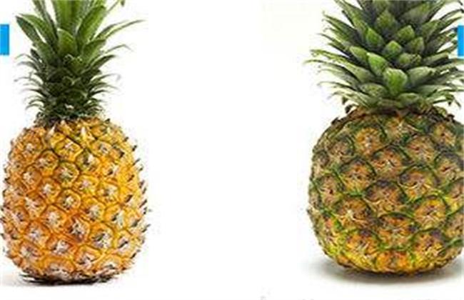 凤梨和菠萝区别