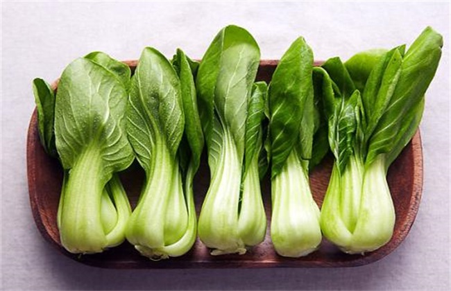 小白菜常见病害及防治