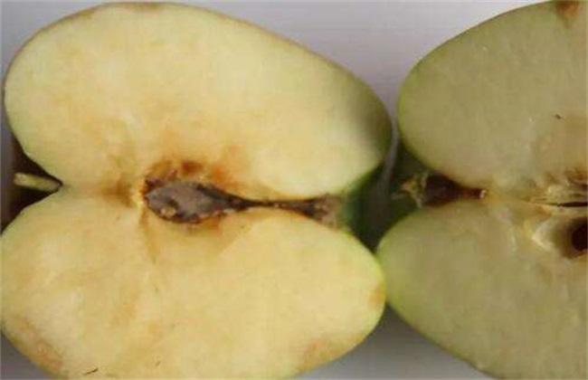苹果霉心病的危害及防治方法