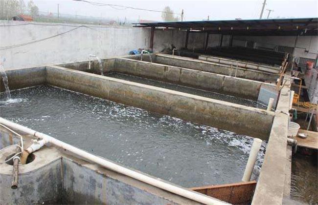 泥鳅 无土养殖 技术