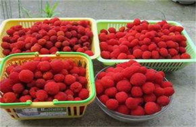 山莓多少钱一斤