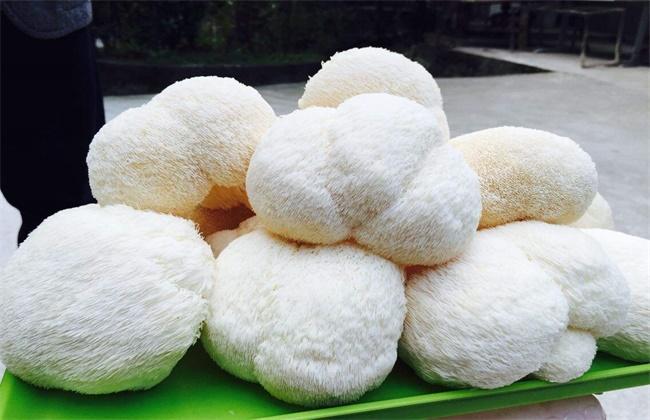 猴头菇价格多少钱一斤