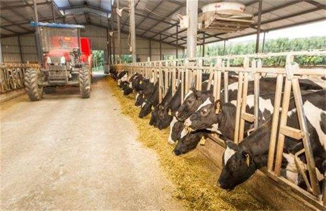 奶牛 冬季 饲养管理