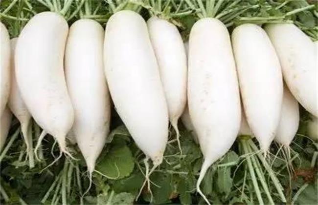 萝卜白锈病的特征及防治