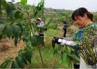 杜仲的种植方法