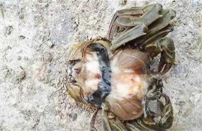 河蟹 常见病害 防治