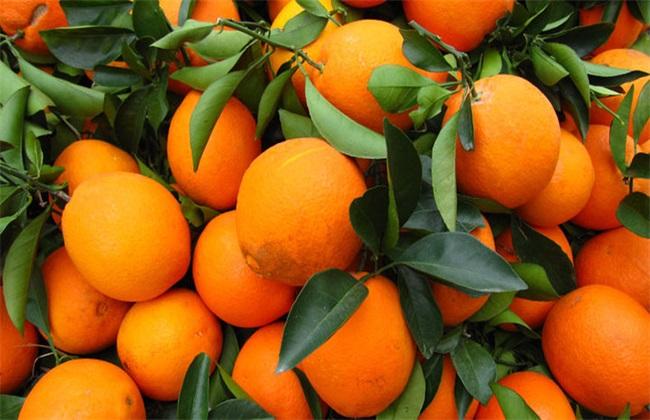 脐橙 价格 多少钱一斤