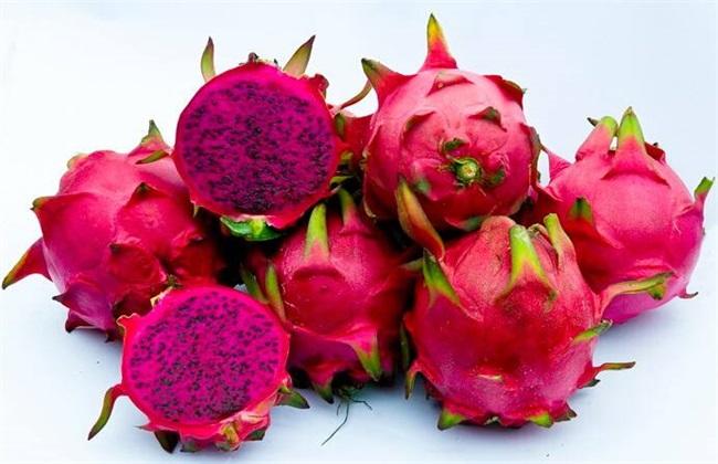 红心火龙果的种植方法