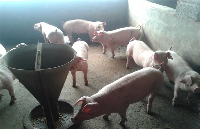 仔猪 断奶后 饲养管理