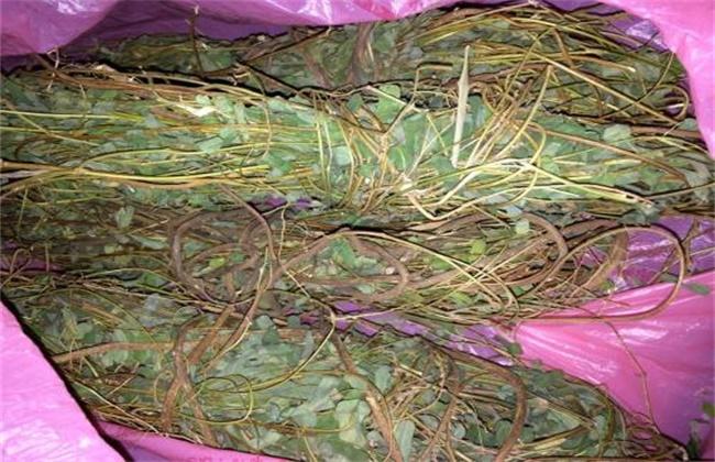 鸡骨草多少钱一斤