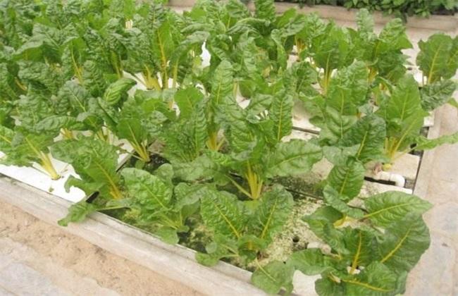 水培蔬菜的简易方法