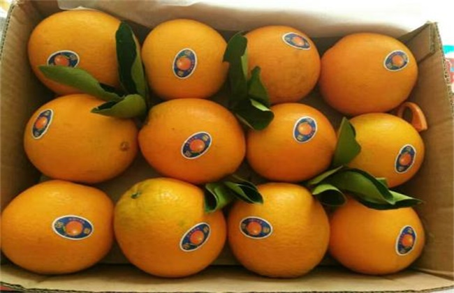 血橙多少钱一斤