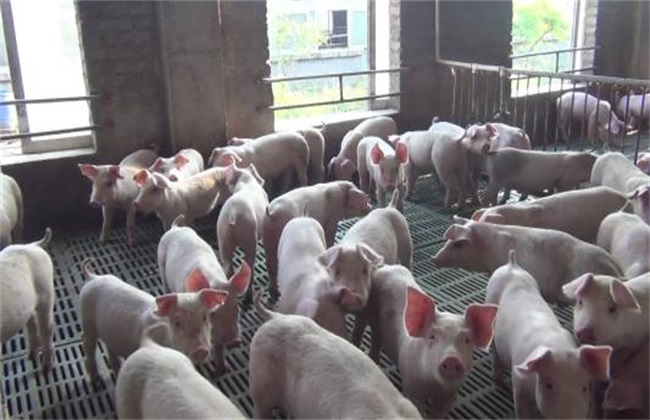 仔猪管理时的注意事项