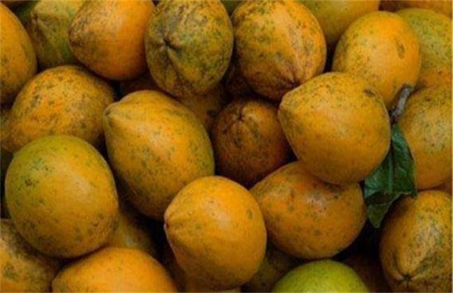 蛋黄果多少钱一斤