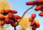 红枣的栽培技术