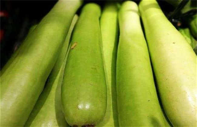 白瓜 种植 方法