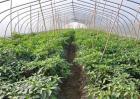 反季节蔬菜栽培的方式